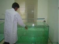 Fish Quarantine Room